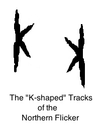Flicker tracks sketch