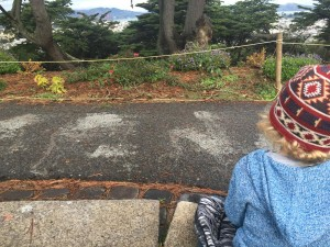 presidio kids bird sit